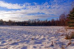 Marshy moorland covered with snow. The marshy moorland covered with snow. Around birch without leaves. The sun low on the horizon. In the background of the blue royalty free stock photos