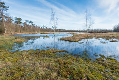 Marshy nature area in Belgium Stock Image