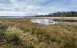 Marshy nature area in Belgium Stock Photo