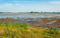 Muddy Dutch nature reserve in summertime. Marshy part of a national park in the Netherlands. It is summer and the blue sky is reflected in the mirror-smooth Stock Photo