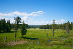 Marshy Plain in Yellowstone Royalty Free Stock Photos