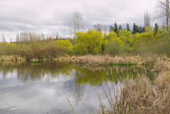 Marshy pond with grasses and trees Royalty Free Stock Photo