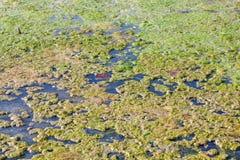 Marshy powierzchnia Zdjęcia Royalty Free