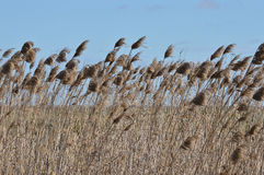 Marshy roślinność Obrazy Stock