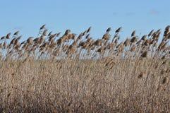 Marshy roślinność Obrazy Royalty Free