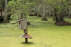 A marshy swamp covered in green algae Royalty Free Stock Images