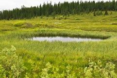 Marshy tundra blisko rzecznego Lemva zdjęcie royalty free