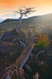 marsian växt Fotografering för Bildbyråer