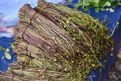 Marsilea crenata. In market local at Laos Asia royalty free stock photography
