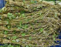 Marsilea crenata. In market local at Laos Asia stock photo