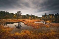 Marsklan i norsk boreal skog nära Trondheim, Norge royaltyfria foton