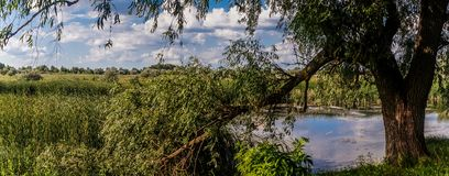 Marsklannatur av Louisiana Naturligt USA parkerar arkivbild