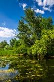 Marsklannatur av Louisiana Naturligt USA parkerar royaltyfria bilder