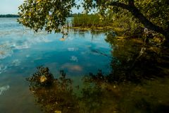 Marsklannatur av Louisiana Naturligt USA parkerar royaltyfri foto