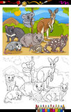 Marsupials animals cartoon coloring book Stock Photos