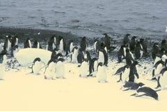 marszów pingwiny Fotografia Royalty Free