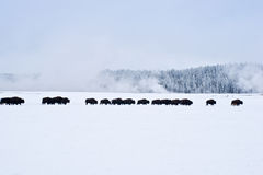 marsz zima Zdjęcia Stock