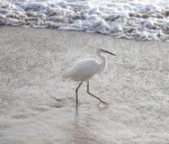 Marszowy Egret fotografia stock
