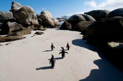 marszu pingwin Zdjęcie Stock