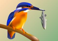 Martín pescador del pájaro en una rama con los pescados en su pico, golpeteo del vector stock de ilustración