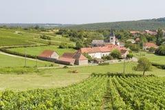 Burgunder stockbild