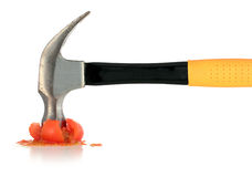 Martelo amarelo tomate vermelho Squashed isolado imagens de stock royalty free