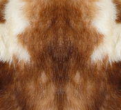 Marten fur. Stock Photo