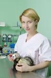 Marten pequeno ao veterinário Fotografia de Stock Royalty Free