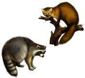 Marten and Raccoon. Isolated Illustration on white background Royalty Free Stock Photography
