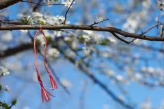 Martenitsa Bulgarian tradition. Bulgarian traditional custom spring sign Martenitsa on blosson tree branch against blue sky Royalty Free Stock Images