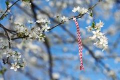 Martenitsa Bulgarian tradition. Bulgarian traditional custom spring sign Martenitsa on blosson tree branch against blue sky Stock Images