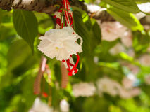 Martenitsa on a flowering tree in spring. On the first day of March and for a few days afterwards, Bulgarians exchange and wear white and red tassels called Stock Images