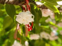Martenitsa su un albero di fioritura in primavera Immagini Stock