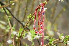 `Martenitsa` - traditional bulgarian bracelet tied on the blossom tree. `Martenitsa` - traditional bulgarian woolen bracelet tied on the blossom tree Royalty Free Stock Photo