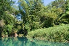 Martha Brae. Wilderness along the Martha Brae River, Falmouth, Jamaica Stock Photos