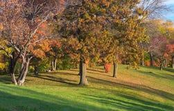 Marthaler Park Autumn Trees on Hilltop. Marthaler park autumn with colorful leaves on trees and fallen on grassy hilltop in west st paul minnesota Stock Photo