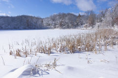 Marthaler Park Pond Trees and Reeds in Winter Stock Photo