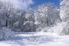 Marthaler Park Trees and Marsh in Winter Stock Photography