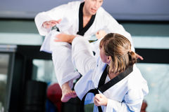 Martial Arts sport training in gym Royalty Free Stock Photo