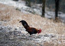 Martillo a nevar día Foto de archivo libre de regalías