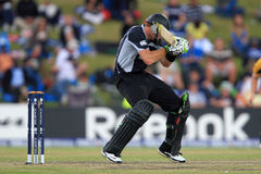 Martin Guptill Royalty Free Stock Photography
