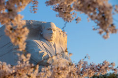 Martin Luther King Monument surrounded by cherry blossoms in Was Royalty Free Stock Image