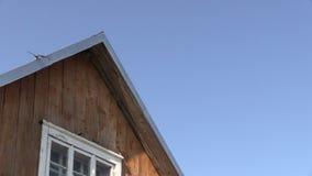 Martin-martlet Vögel fliegen und leben unter Hausdachecke stock video footage