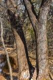 Martin-Naturpark im Fall Stockbilder