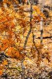 Martin-Naturpark im Fall Stockfoto