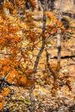 Martin-Naturpark im Fall Lizenzfreies Stockbild
