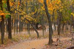 Martin Park, Oklahoma City di nanowatt fotografie stock
