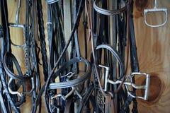 Martingale e Breastcollars del cavallo fotografia stock libera da diritti