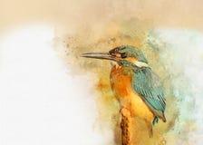 Martinho pescatore comum - pintado com aquarela imagem de stock royalty free