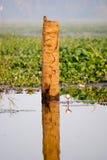 Martinho pescatore em um coto Foto de Stock Royalty Free